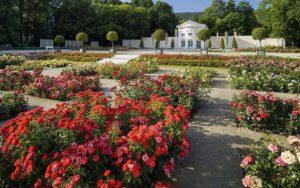 австрия баден розар