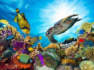Австралия, Барьерный риф