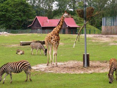 Польша, Гданьский зоопарк