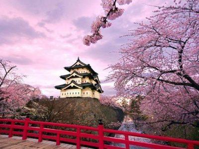 Япония - Сакура